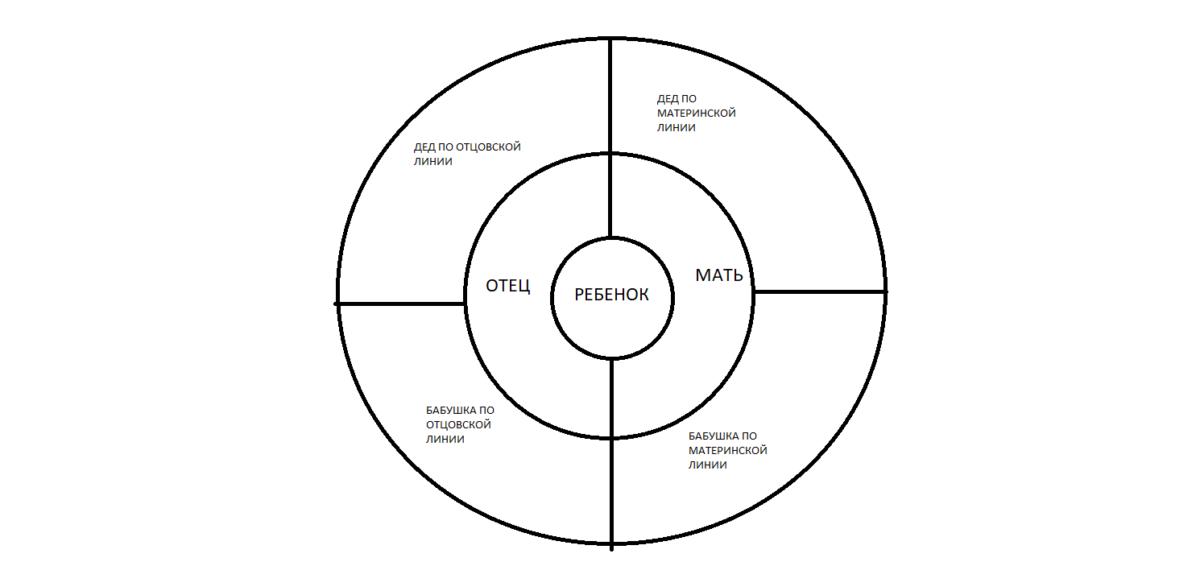 Круговая таблица - схема родословного древа
